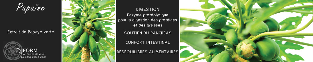 Papaine enzyme protéolytique digestion